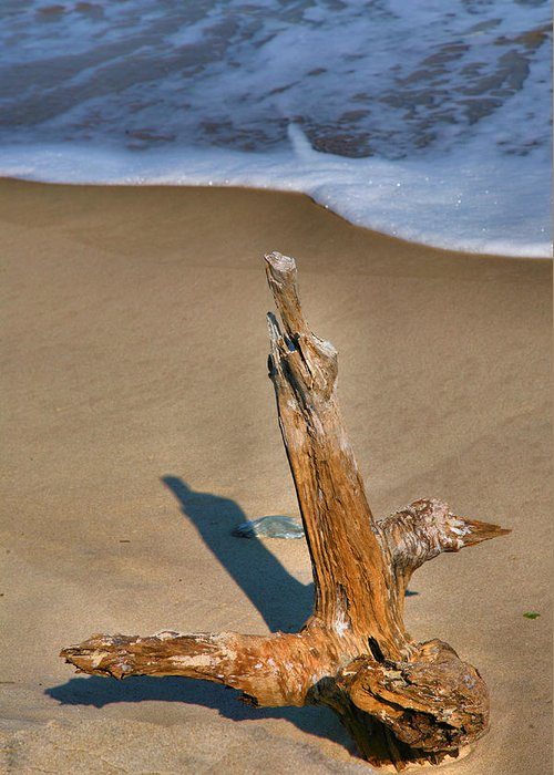 Limb Greeting Card featuring the photograph Snag And Surf II by Steven Ainsworth