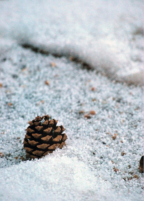 Pine Cone Greeting Card featuring the photograph Snow Cone by Amee Cave