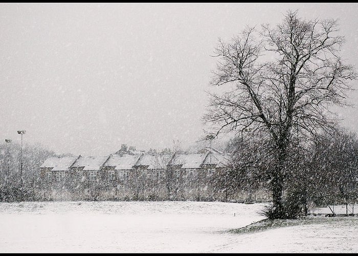 Branches Greeting Card featuring the photograph Snow Scape London Sw by Lenny Carter