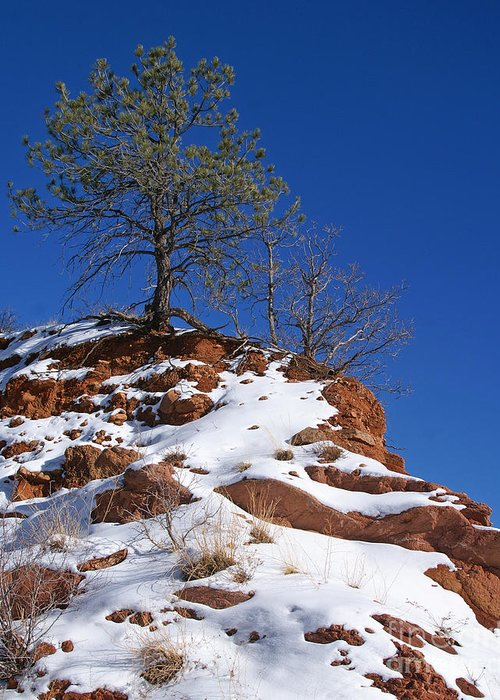 Colorado Greeting Card featuring the photograph Snow Tree by Jack Norton
