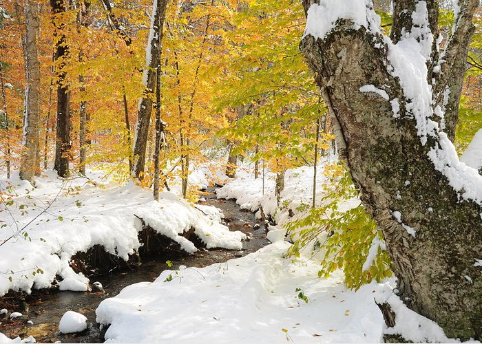 Snow Greeting Card featuring the photograph Snowy Brook by Gerald Hiam