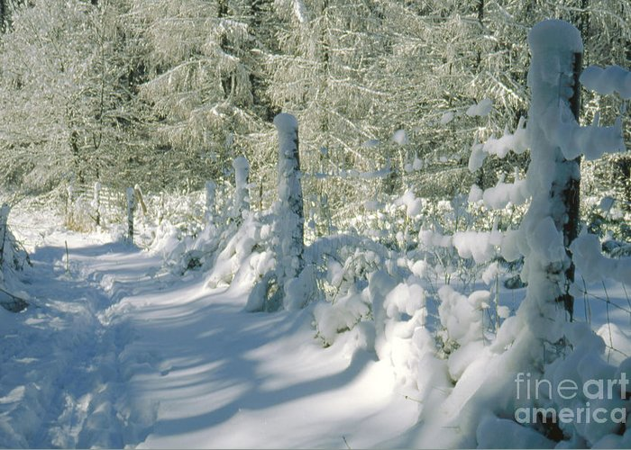 Landscape Greeting Card featuring the photograph Snowy Footpath In Winter Wonderland by Heiko Koehrer-Wagner