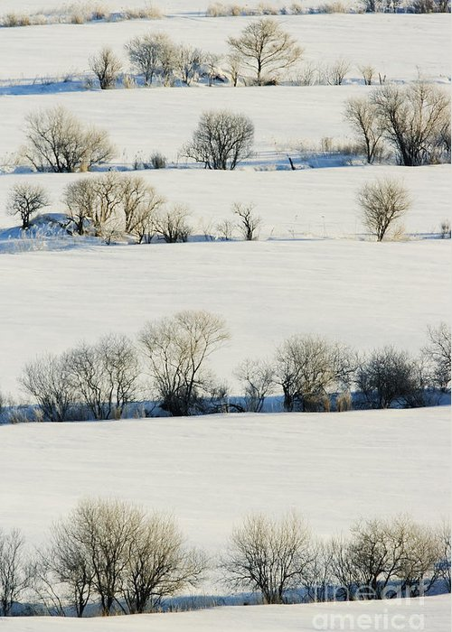 Cold Greeting Card featuring the photograph Snowy Landscape by Jeremy Woodhouse