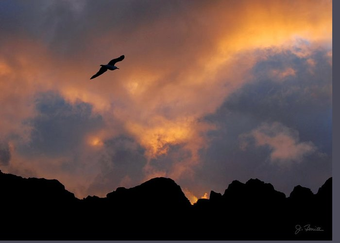 Norway Greeting Card featuring the photograph Soaring In The Midnight Sun by Joe Bonita