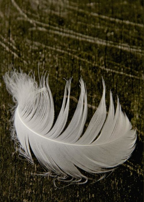 Feather Greeting Card featuring the photograph Soft Curve One by Odd Jeppesen
