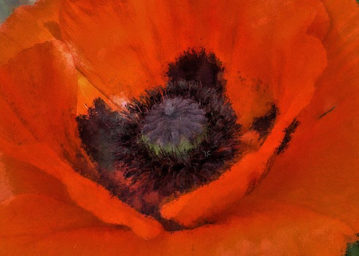 Poppy Greeting Card featuring the painting Soft Dreamy Poppy by Barbara Thorvilson