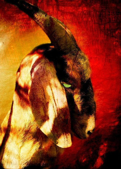 Goat Greeting Card featuring the photograph Son Of Perdition by Leah Moore