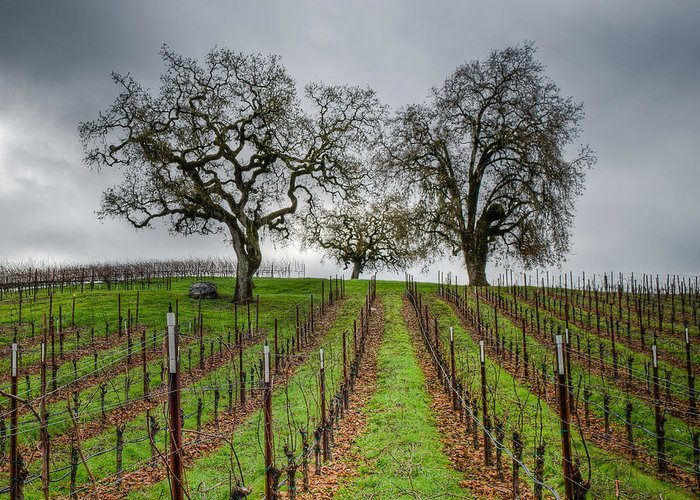 Sonoma County Greeting Card featuring the photograph Sonoma County Vineyard by Joan McDaniel