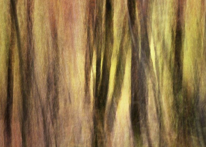 Kinetic Photography Greeting Card featuring the photograph Sourwoods In Autumn Abstract by Rob Travis