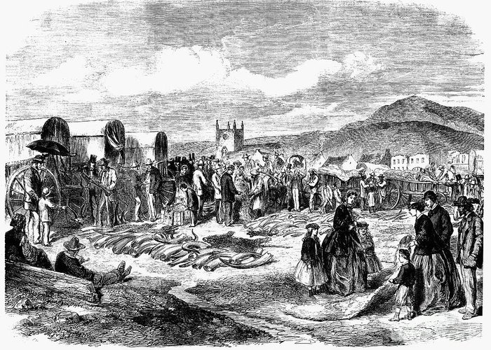 1866 Greeting Card featuring the photograph South Africa: Ivory Trade by Granger