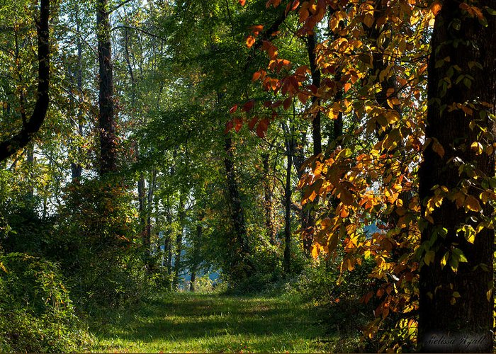 Southern Indiana Greeting Card featuring the photograph Southern Indiana Fall Colors by Melissa Wyatt