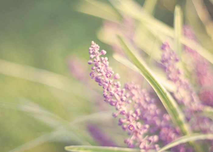 Soft Purple Flower Photography Greeting Card featuring the photograph Speak Softly by Amy Tyler