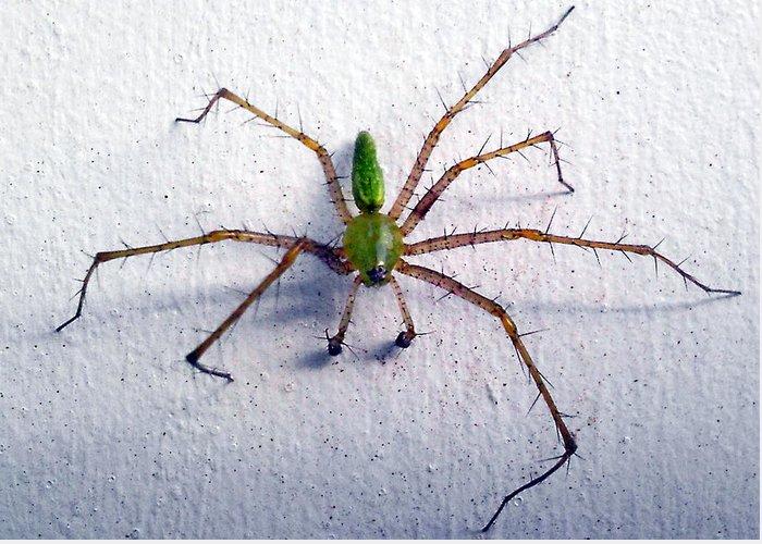 Spider Greeting Card featuring the photograph Spider by Dennis Hofelich