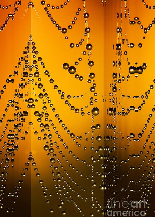 Odon Greeting Card featuring the digital art Spider Web Reflections by Odon Czintos