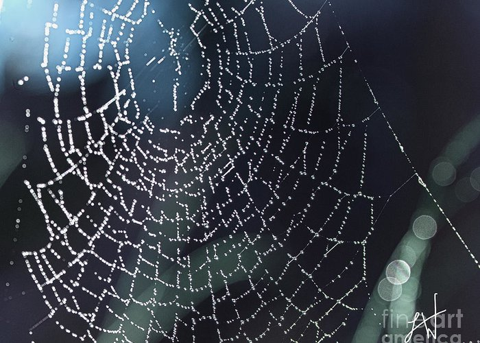 Spiderweb Greeting Card featuring the photograph Spiderweb Blues by Artist and Photographer Laura Wrede