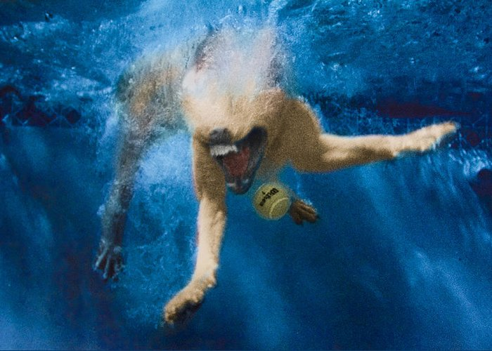Dog Greeting Card featuring the photograph Splashdown 2 by Jill Reger