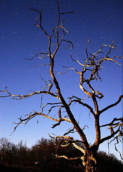 Photography Greeting Card featuring the photograph Spooky Tree by Larry Ricker
