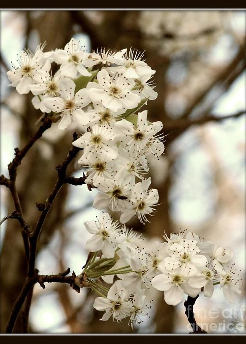 Spring Greeting Card featuring the photograph Spring Blossoms by Megan Wilson