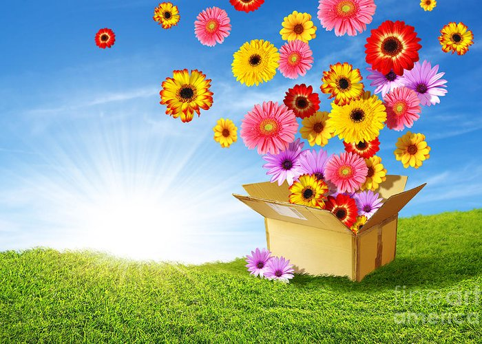 Background Greeting Card featuring the photograph Spring Delivery by Carlos Caetano