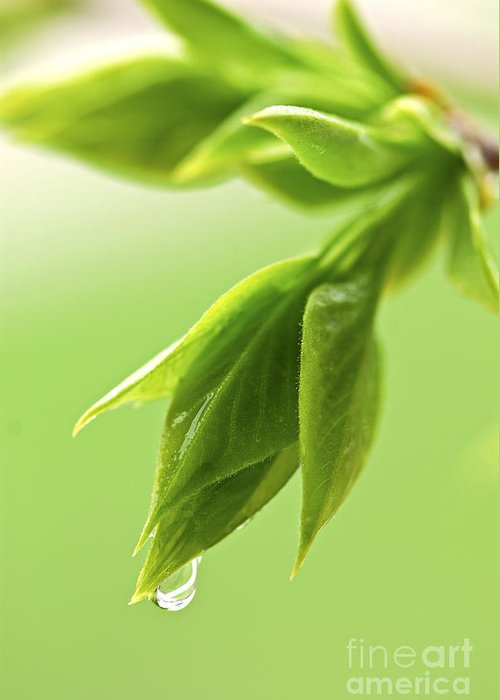 Spring Greeting Card featuring the photograph Spring Green Leaves by Elena Elisseeva
