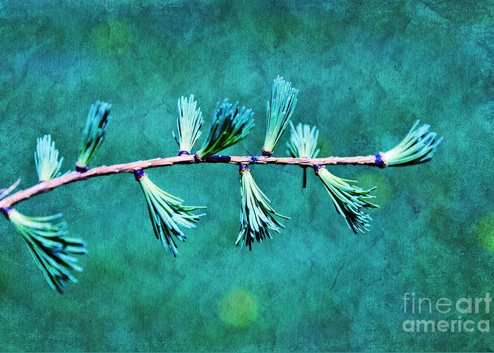 Tree Branch Greeting Card featuring the photograph Spring Has Sprung by Aimelle