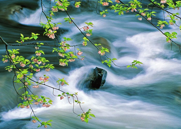 Spring Landscapes Greeting Card featuring the photograph Spring Middle Prong Little River by Chuck Wickham