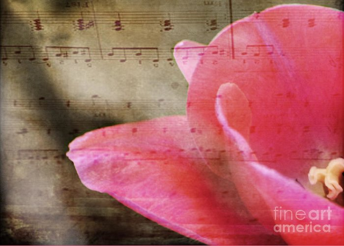 Music Greeting Card featuring the photograph Spring Sings by Traci Cottingham