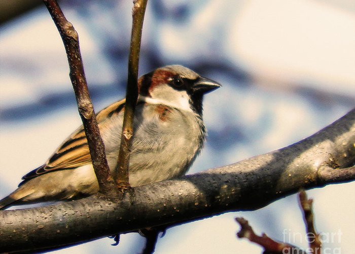 Bird Greeting Card featuring the photograph Spring Sparrow Set 1 by Emily Kelley