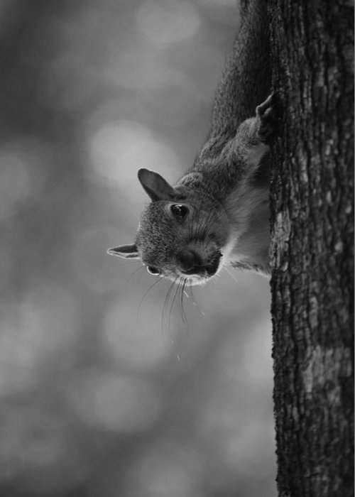 Squirrel Greeting Card featuring the photograph Squirrel On A Tree by Carrie Munoz