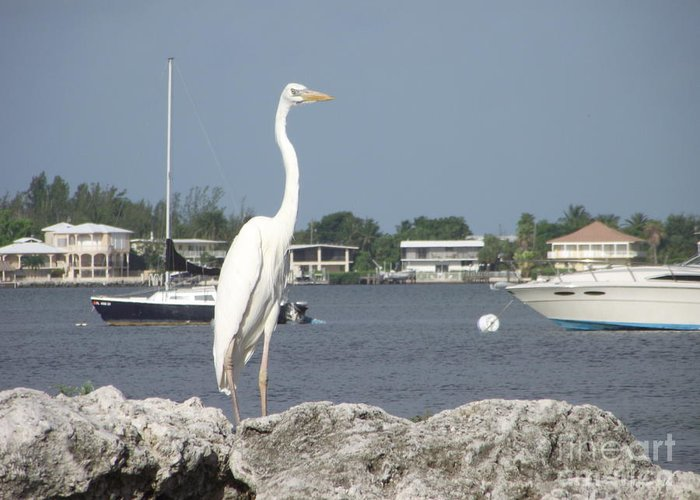 Key Largo Shoreline Greeting Card featuring the photograph Standing Guard by Michelle Welles