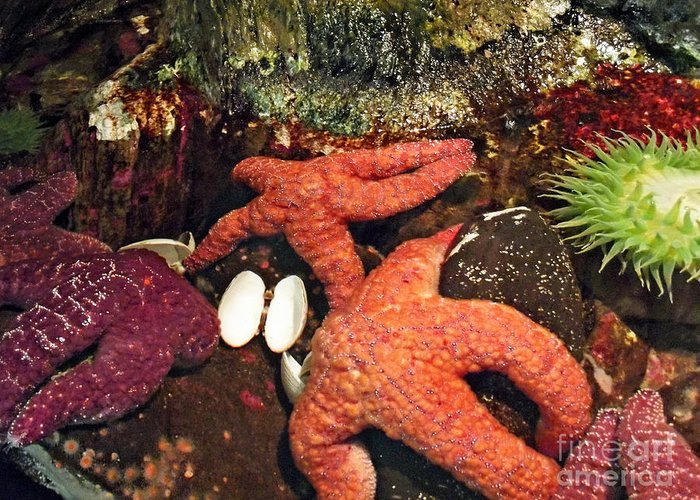 Starfish Medley Greeting Card featuring the photograph Starfish Medley by Methune Hively