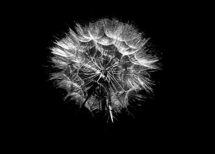 Black And White Greeting Card featuring the photograph Stark Puff by Peri Craig