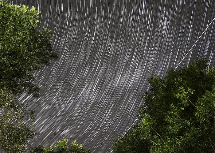 Night Greeting Card featuring the photograph Startrails Above Tree by Cristian Mihaila
