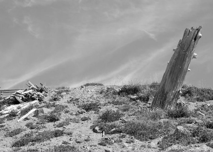 Bw Greeting Card featuring the photograph Still Standing 2012 Bw by Connie Fox
