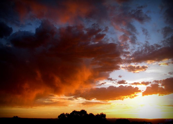Albuquerque Greeting Card featuring the photograph Stormy Sunset Over A Tree Canopy by Aaron Burrows
