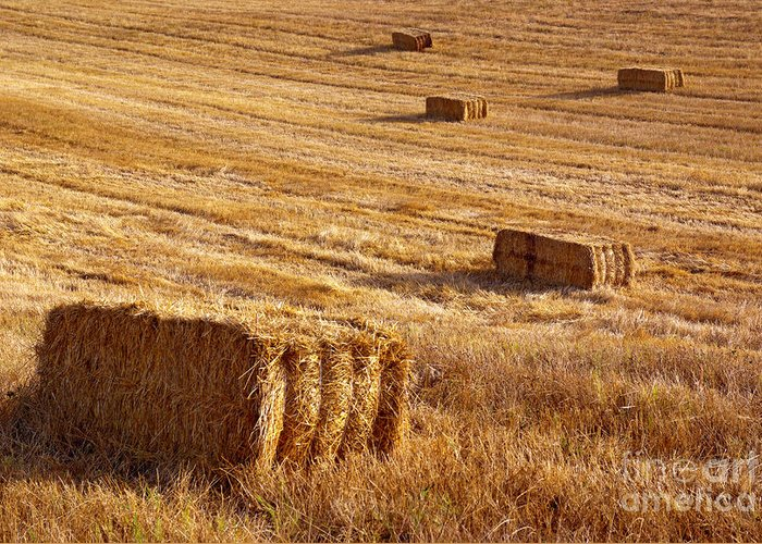 Agriculture Greeting Card featuring the photograph Straw Field by Carlos Caetano