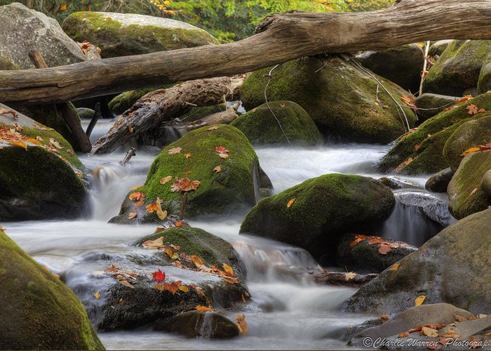 Stream Greeting Card featuring the photograph Stream Of Thought by Charles Warren