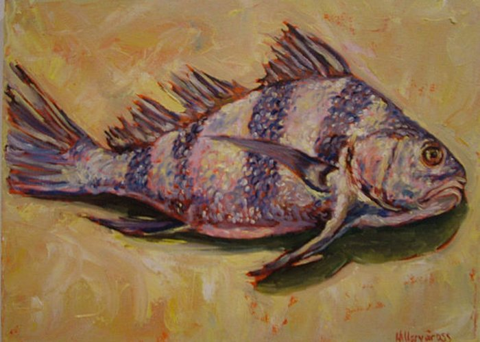 Fish Greeting Card featuring the painting Striped Drum Fish by Hillary Gross