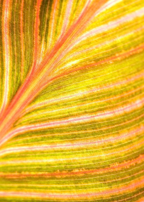 Striped Leaf Greeting Card featuring the photograph Striped Leaf by Bonnie Bruno