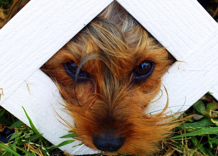 Dogs Greeting Card featuring the photograph Stuck On You by Karen Wiles