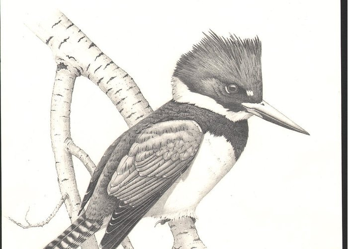 Kingfisher Greeting Card featuring the drawing study for Belted Kingfisher painting by Bill Gehring