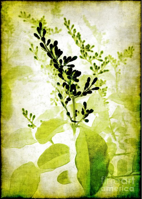 Leaves Greeting Card featuring the photograph Study In Green by Judi Bagwell
