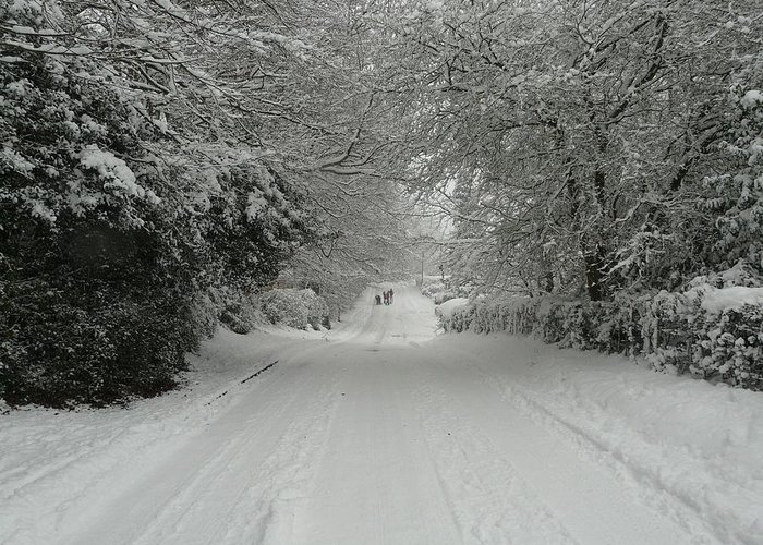 Christmas Cards Greeting Card featuring the photograph Sugar Road IIi by Rdr Creative