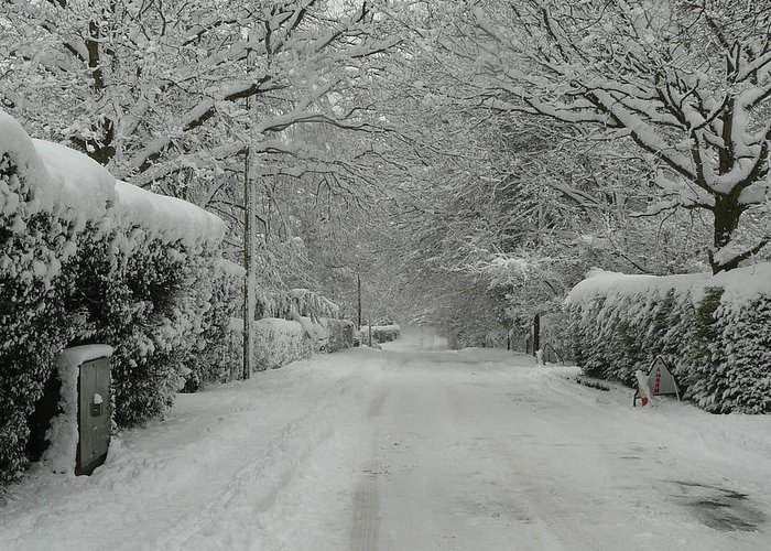 Christmas Cards Greeting Card featuring the photograph Sugar Road by Rdr Creative