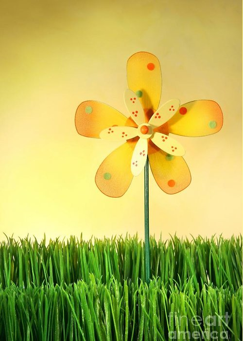 Background Greeting Card featuring the photograph Summer Fun In The Grass by Sandra Cunningham