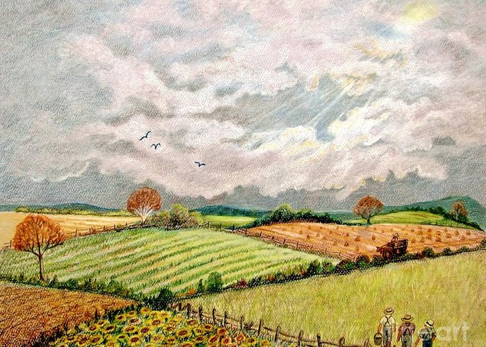 Harvest Time Drawings Greeting Cards