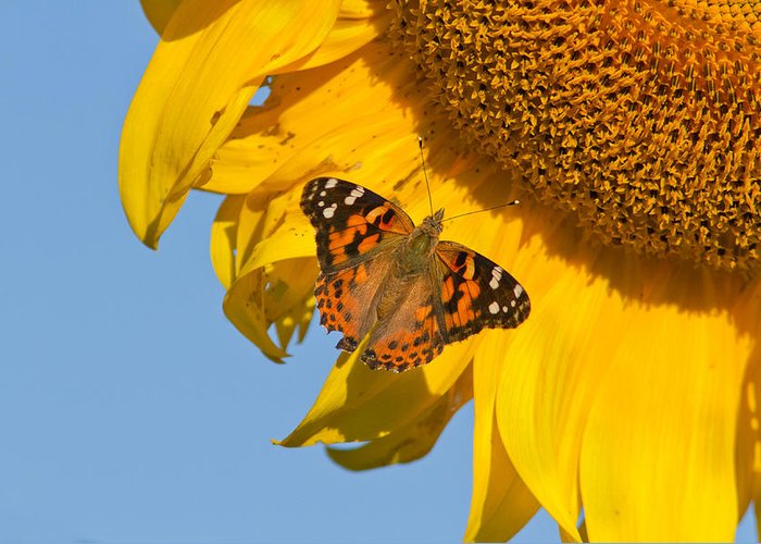 Beautiful Greeting Card featuring the photograph Summer Time by Mircea Costina Photography