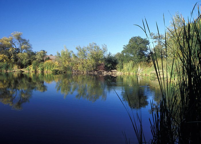 Landscape Greeting Card featuring the photograph Summertime Reflections by Kathy Yates