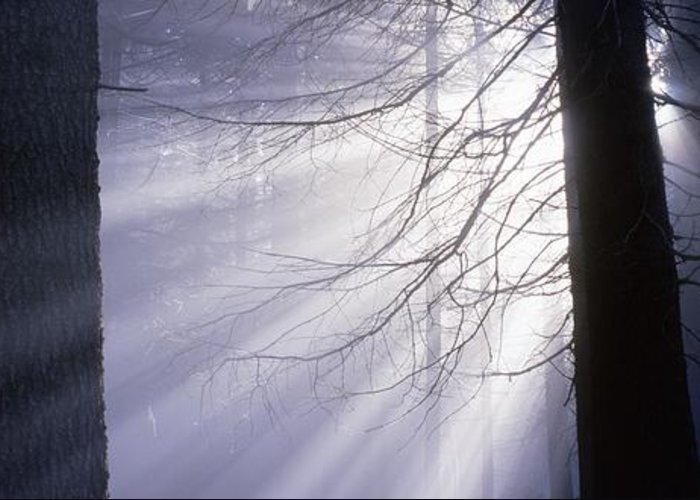 Nature Greeting Card featuring the photograph Sun Breaking Through Mists by Ulrich Kunst And Bettina Scheidulin