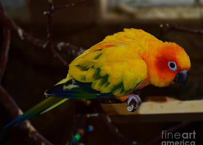 Sun Parrot Greeting Card featuring the photograph Sun Parrot by Jack Moskovita